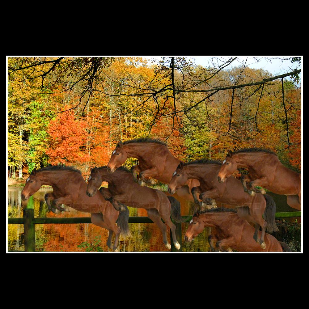 Chevaux d'automne