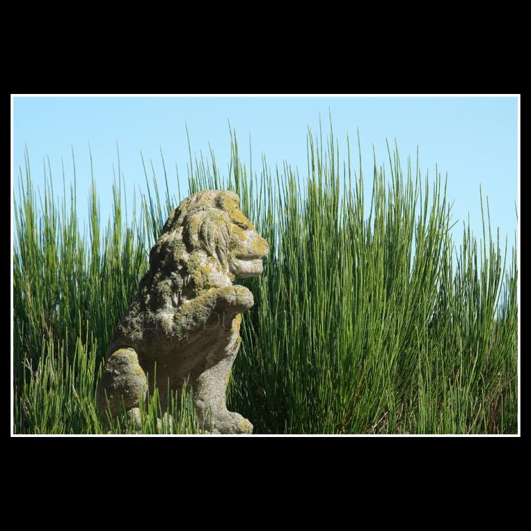 Lion au genêt...