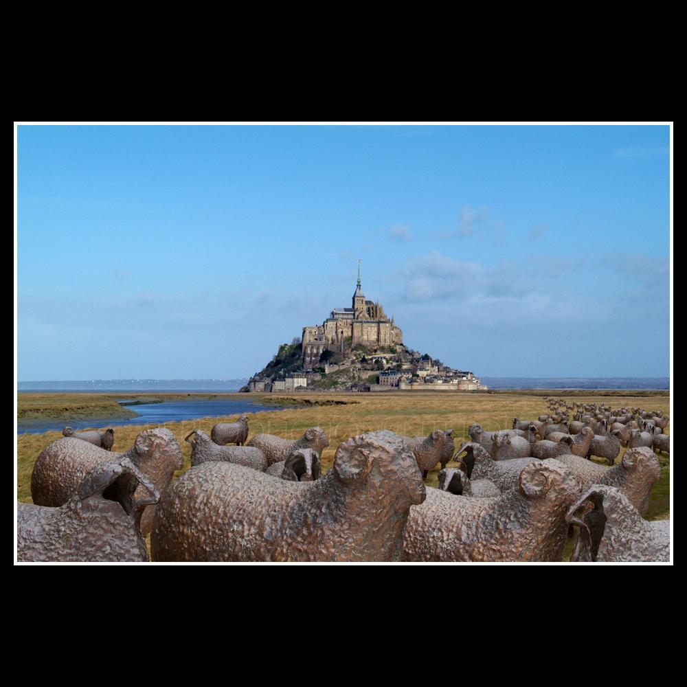Moutons au Mt St M...