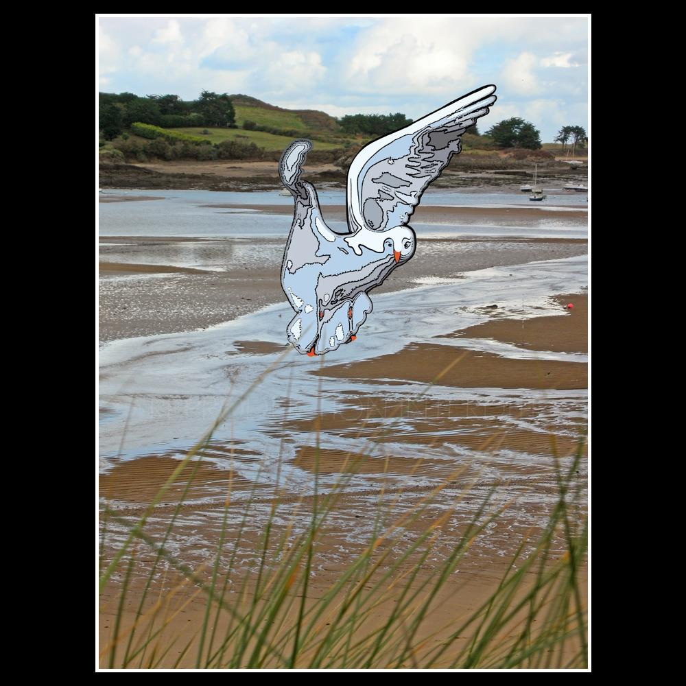 Oiseau au Havre...