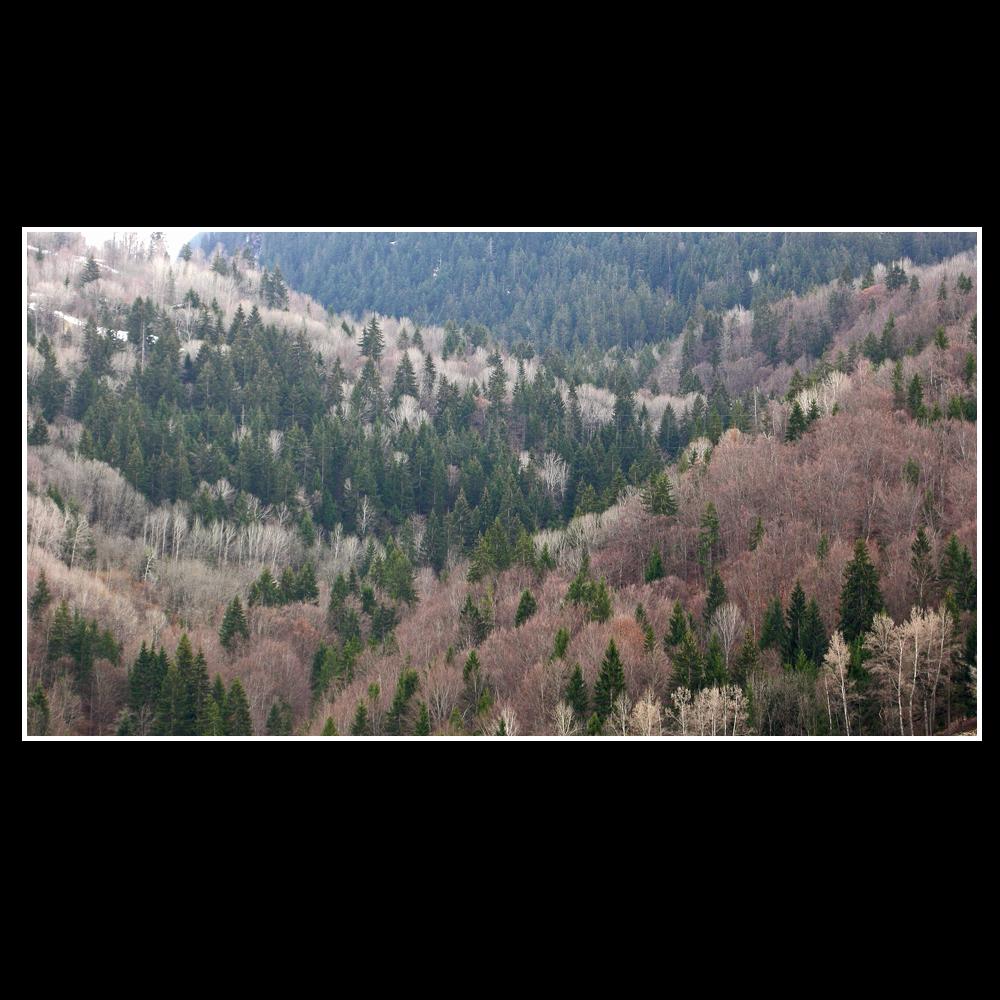 Vallée de Bozel